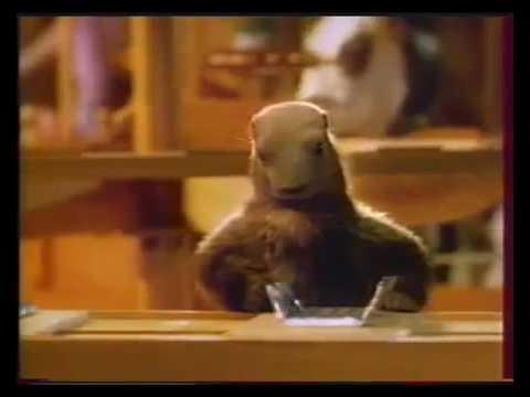 La marmotte...