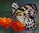 florica.fluture